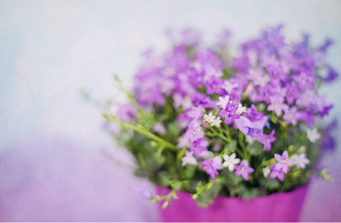 Online Florist Guide for Occasional Flowers