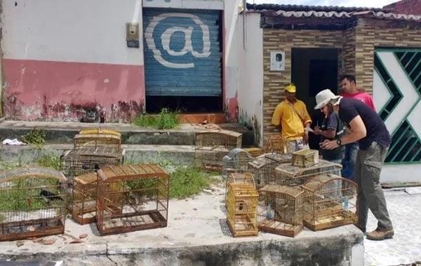 A Operação Fauna Livre tem como objetivo combater tráfico, maus tratos, entre outros crimes contra animais
