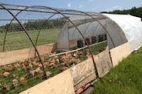 model kandang ayam kampung organik
