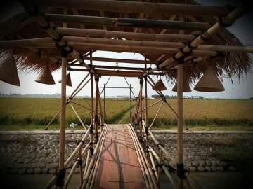 upacara adat nyalin ngala indung pare di kawarang