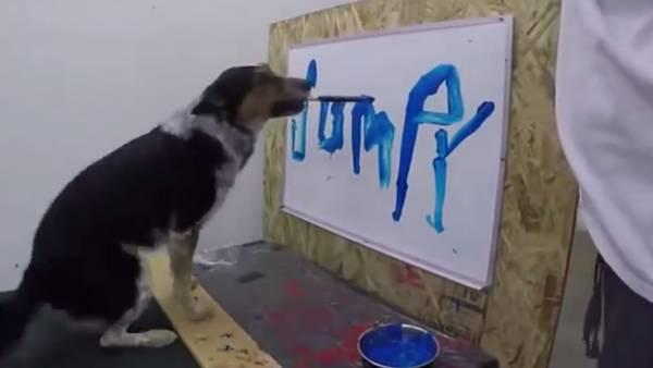 Jumpy el perro que sabe escribir su nombre