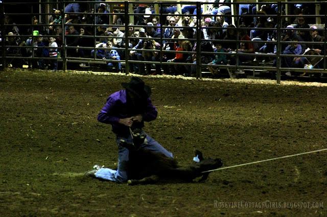#rodeo #cowboys #cows #horses