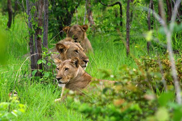 African protected area saving endangered megafauna