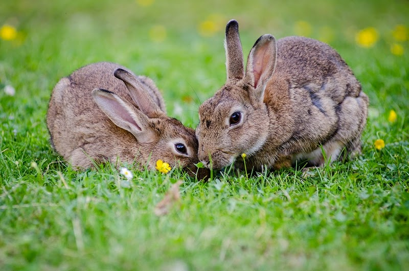 5 Important Things to Look For in Caring for Rabbits