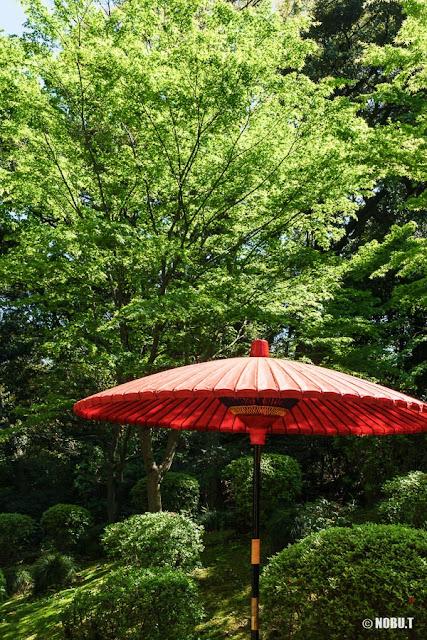 和傘と新緑~六義園(文京区)
