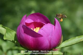 jardinería, jardines, flores, plantas, abejas