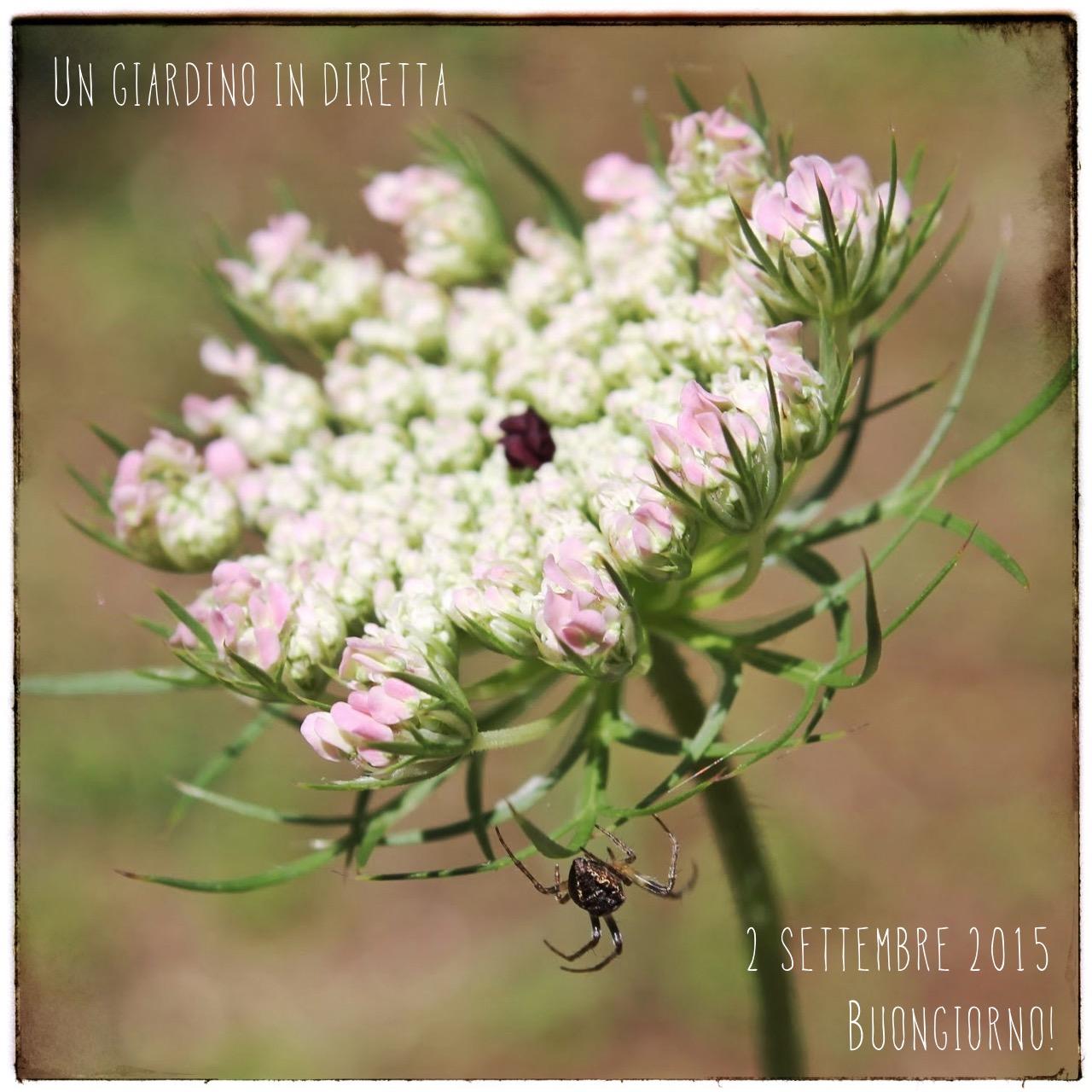 Fiori Selvatici Foto E Nomi fiori di settembre: carota selvatica (daucus carota l.) - un