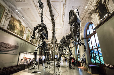 Vienna Natural HIstory Museum by Laurence Norah