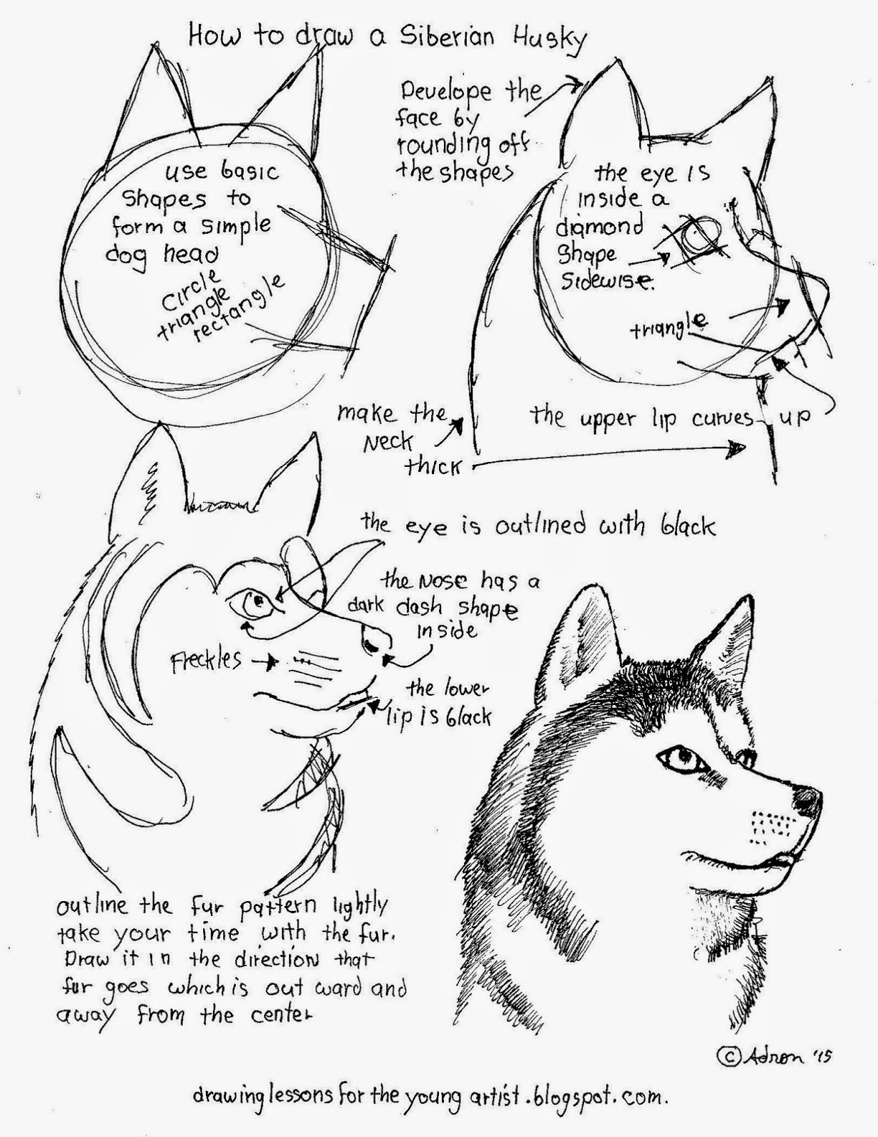 How To Draw Worksheets For The Young Artist How To Draw A Siberian Husky Free Printable Worksheet