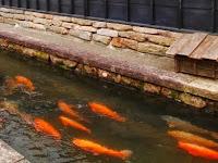 Ini Dia Tips & Trik Budidaya Ikan Di Parit, Sangat Menguntungkan