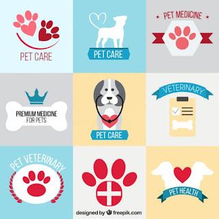 cuidados veterinarios chihuahuas