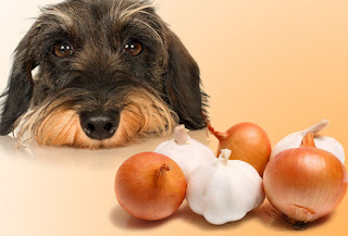 Dog onions