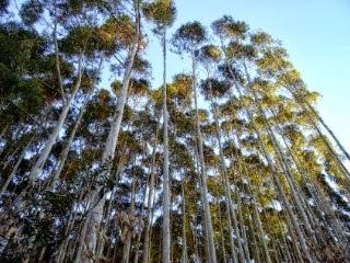 #Silvicultura e Manejo Florestal