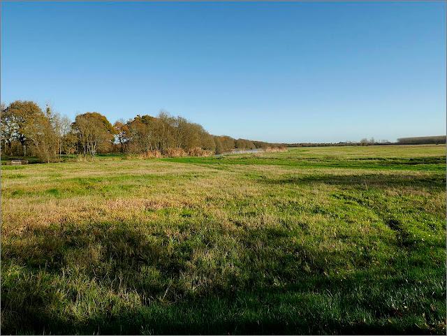 Marais d'Avessac, au bord de la Vilaine (44)