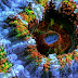 Slow Life: Hypnotizing Macro Timelapse Of Exotic Corals Made With 150,000 Photos