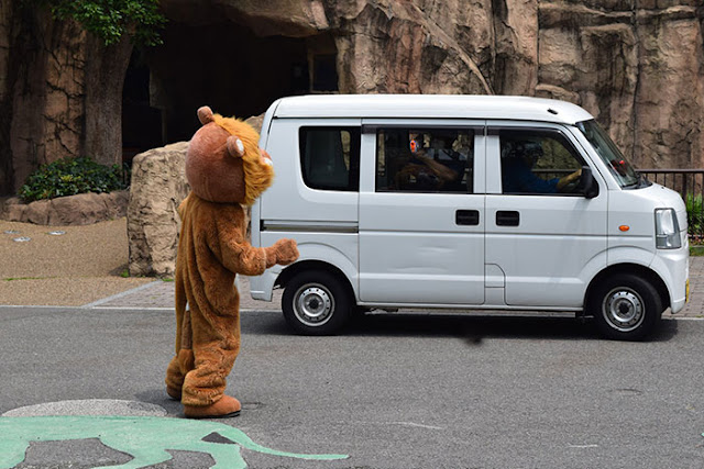 Japanese Zoo Performed A Lion Escape, And The Real Lions' Reaction Was Priceless