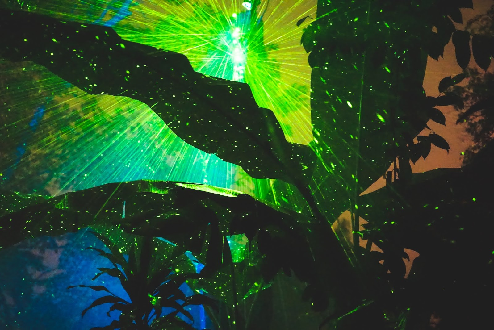 Image result for lumina rainforest
