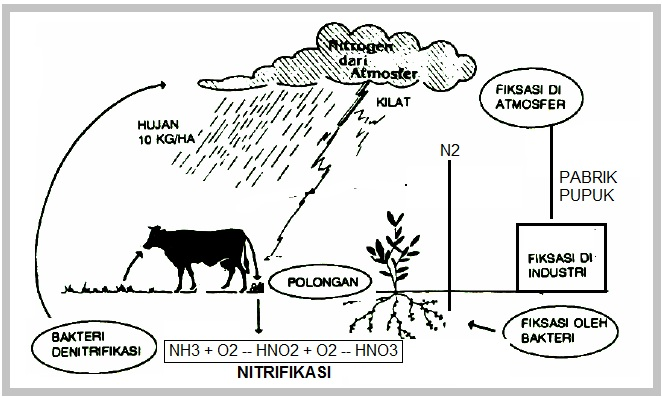 Biologi gonzaga daur nitrogen daur nitrogen ccuart Image collections