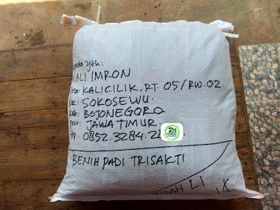 Benih pesanan M. ALI IMRON Bojonegoro, Jatim.   (Sesudah Packing)