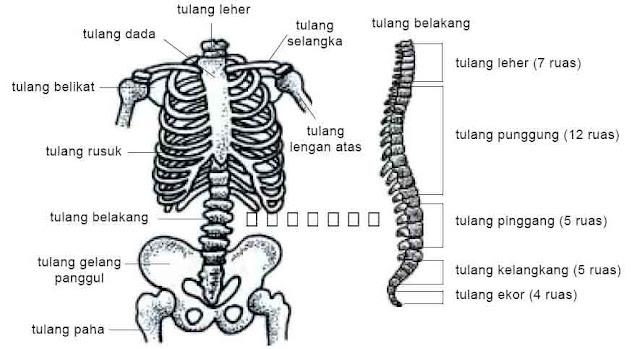 Rangka badan