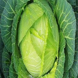 Como vegetais verdes ajudam a impedir o câncer