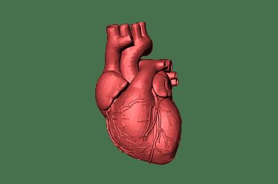 Corazón humano dibujado.