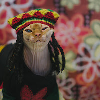 Disco NoFurNo the Sphynx cat in Rasta wig PHOTO BY ANJI MARTIN, POTOK'S WORLD PHOTOGRAPHY©