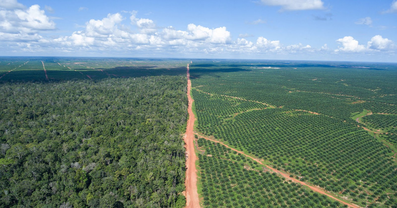agriculture also affects our forests just imagine how much moisture and shade those trees provide