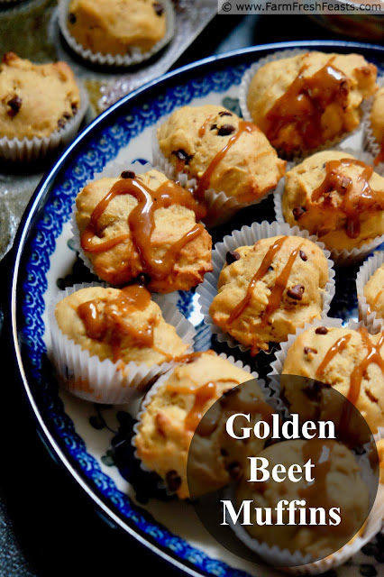 A recipe for roasted golden beet muffins with chocolate chips and a caramel drizzle.