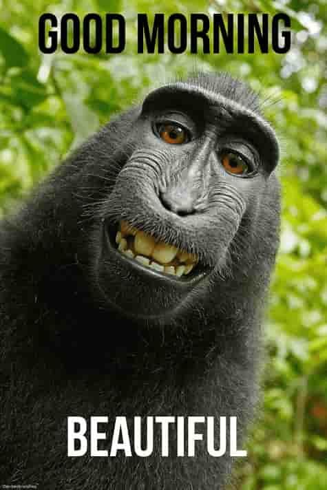 funny good morning monkey images
