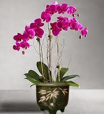 Contoh Gambar 2 Bunga Hiasan Rumah