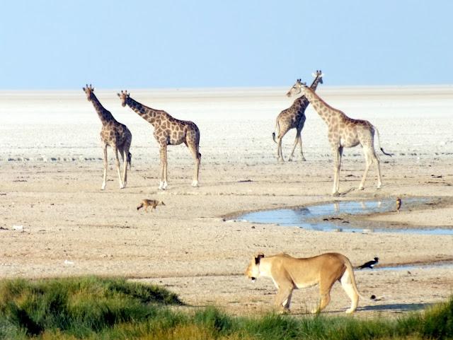Momentazo en Etosha safari