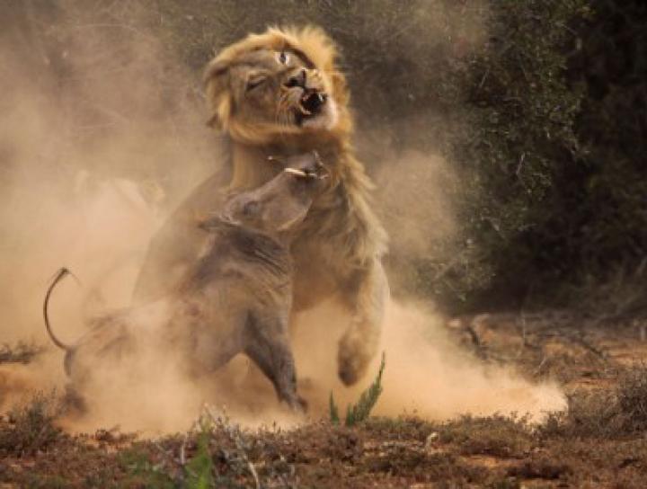 afrikada hayatta kalma mücadelesi veren hayvanların fotoğrafları