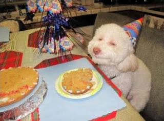 Perro de cumpleaños