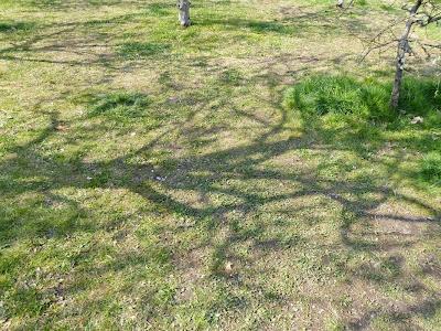 山田池公園 梅林 梅の木の陰