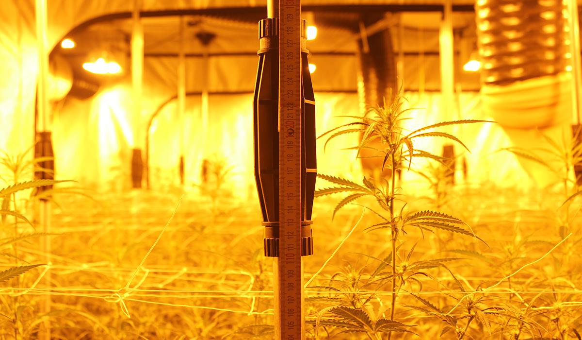 nrw-aktuell.tv: Polizei hebt Cannabisplantage aus - Zwei Personen ...