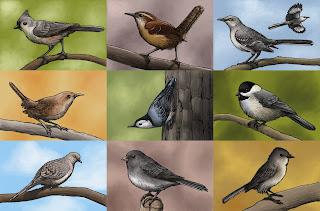 The Birds of Rutgers Newark