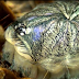 Tarantula molting is like an alien from a sci-fi film! An obvious need to watch!