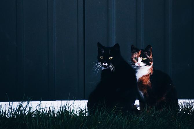 Katten fotograferen