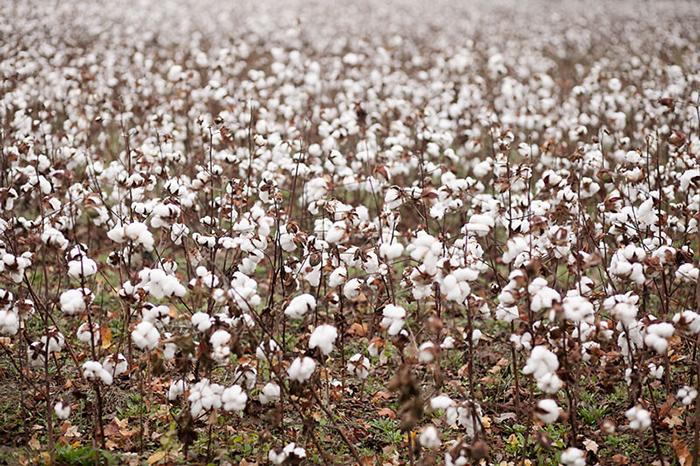 cotton inspiration