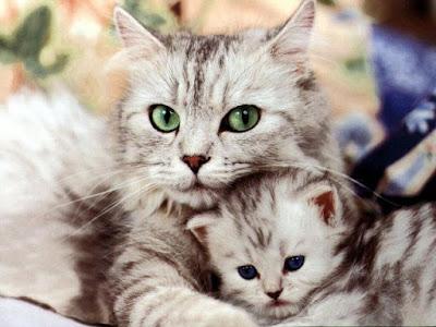 Mengusap-usap Kucing Membuatnya Senang