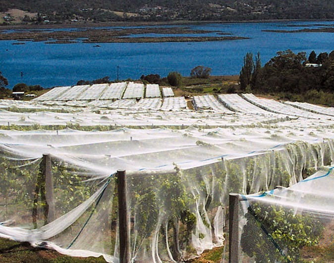 A vineyard in Tasmania covered in netting