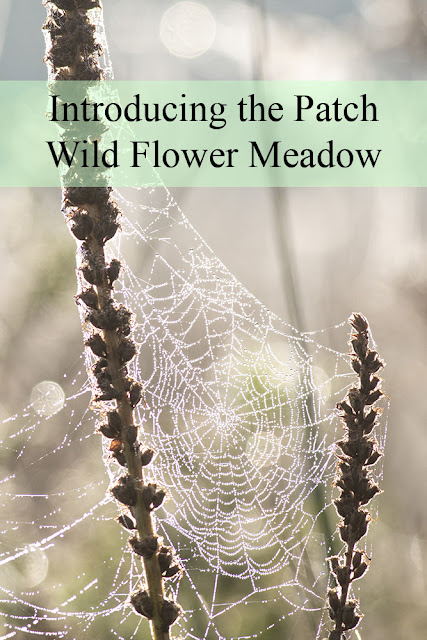 Introducing the Patch - Wild Flower Meadow