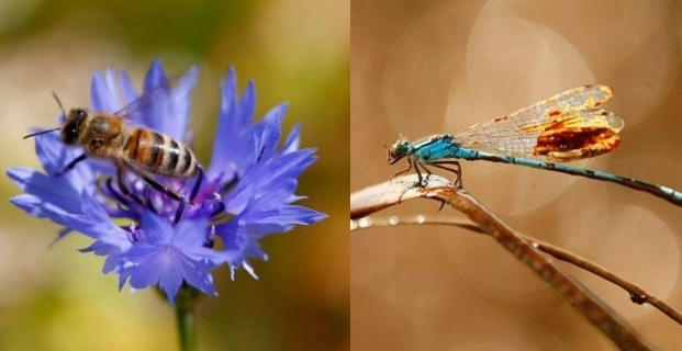 Τα έντομα οδεύουν προς αφανισμό και θα παρασύρουν στον όλεθρο όλο τον πλανήτη
