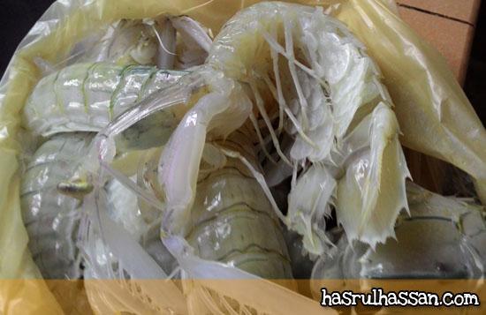Cara Siang Udang Lipan (Mantis shrimp)