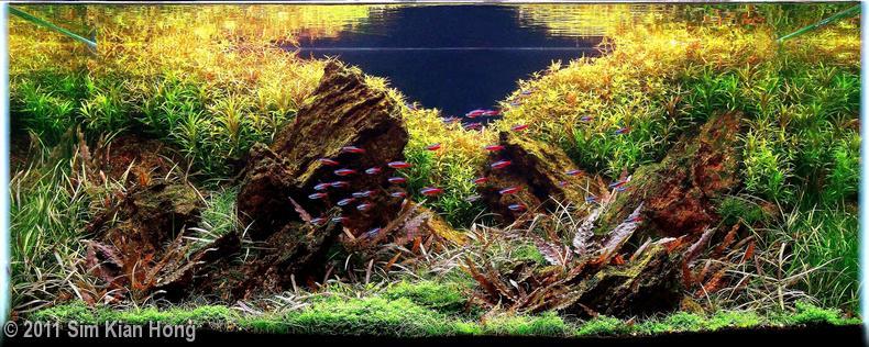 Bạn có nhận ra hồ liễu đỏ trong bố cục hồ thủy sinh này