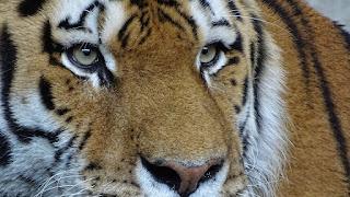 เรื่องเสกมนต์ปลุกเสือตายให้ลุกขึ้น