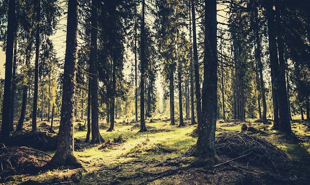Darjeeling Timbers