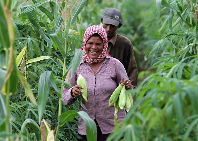 Planteurs de maïs. Photographie WB (cc)