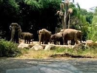 5 Tempat Wisata Alam di Bogor yang Wajib Dikunjungi